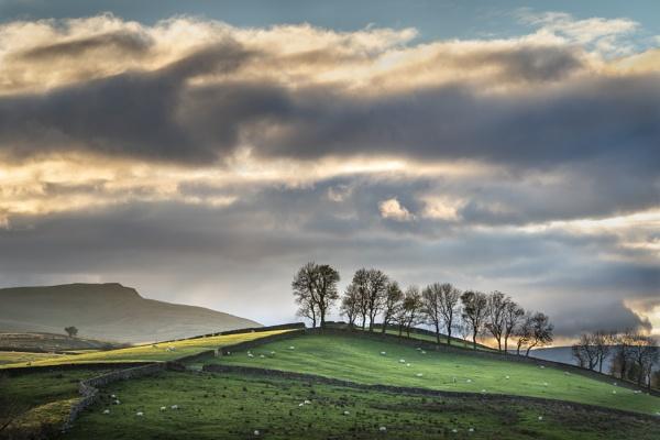 Tree Line, Yorkshire Dales by barrywebb
