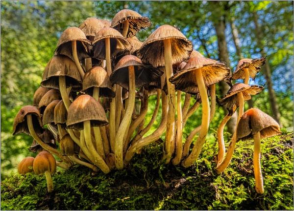 Fungus by GlynnisFrith