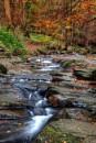 woodland by steviehutch