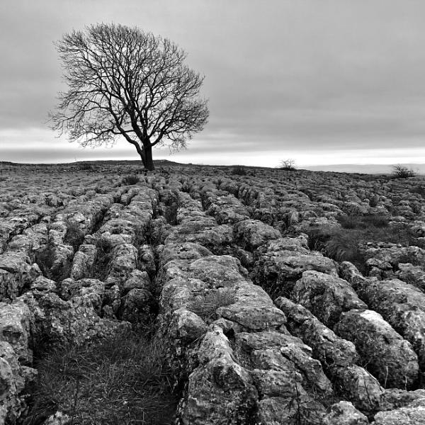 Tree by audi_db
