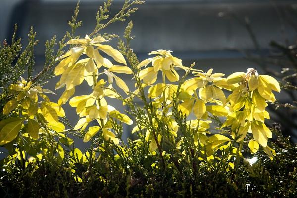 Sunburst Sunday by rambler