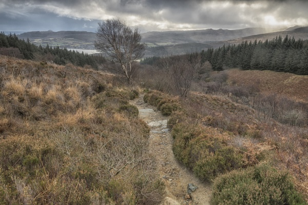 The view from Goatfell by pink