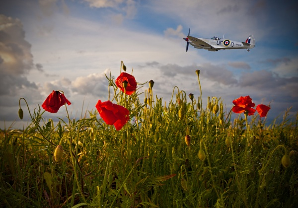 Poppies to Remember by ianrobinson