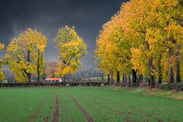 November Colours by SamCampbell