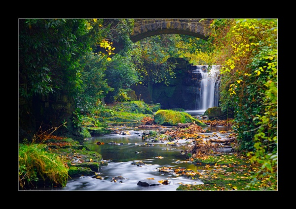 Jesmond Dene in Autumn by NDODS