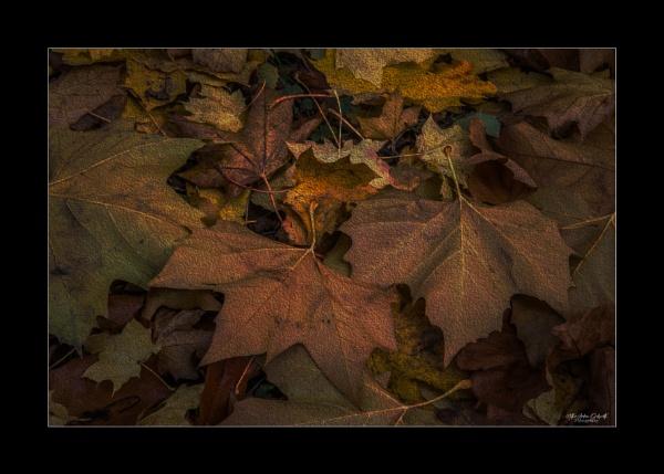 Fallen Leaves by NDODS