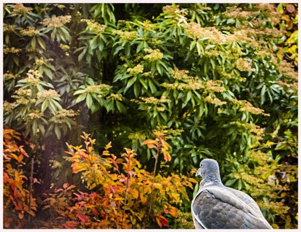Pigeon`s view by derekp