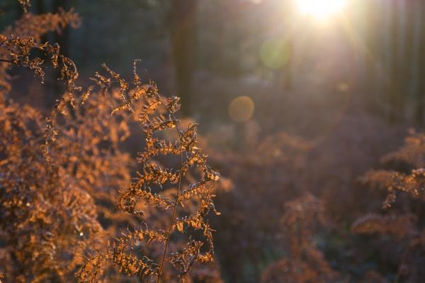 Autumn Evening by ktin