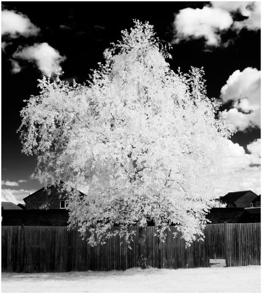 The Tree by Nikonuser1