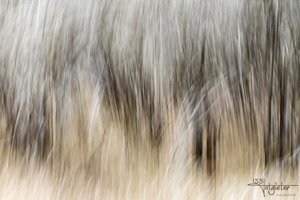 The wind by pottie