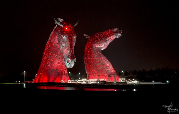Remembrance red at the Kelpies