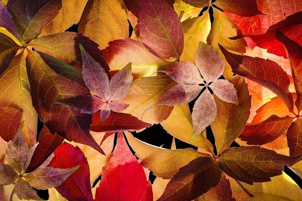 Autumn Splash (2) by Prizm
