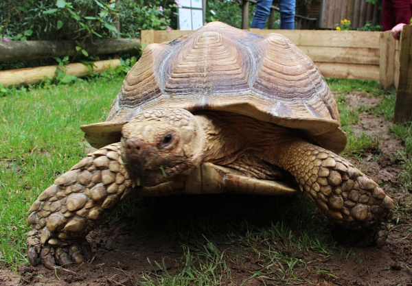 TORTISE by SOUL7