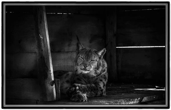 The  Sad Cat by nklakor