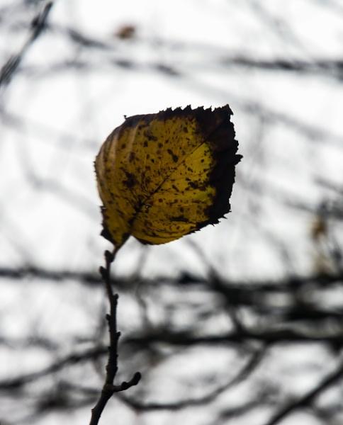 Last leaf hanging by Madoldie