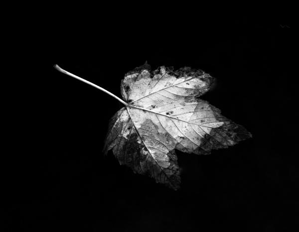 Leaf in water by Madoldie