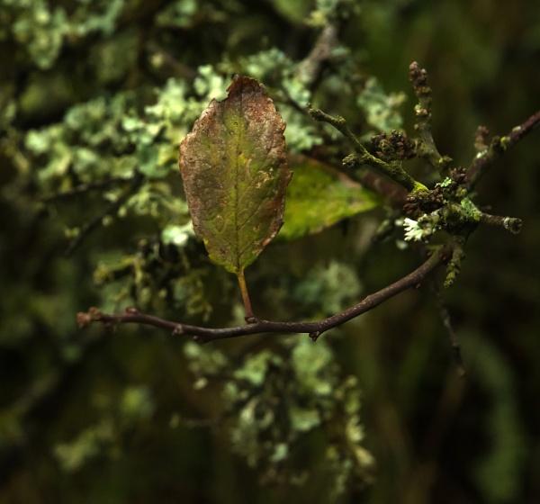 Last leaf standing by Madoldie