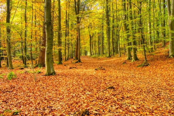 Autumn gold by Ingymon