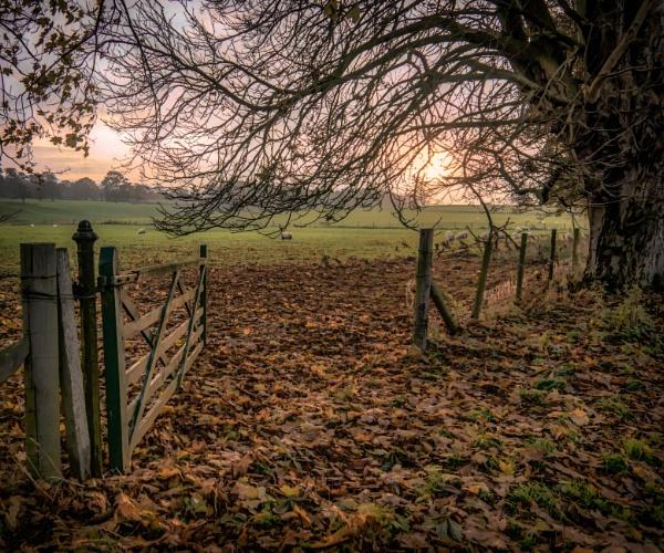 Open gate by BillRookery