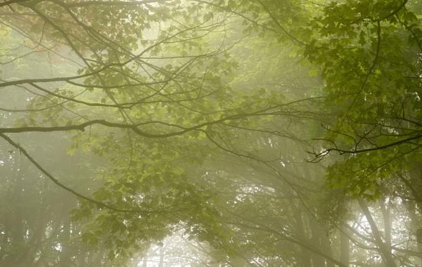 Green by alfpics