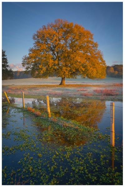 Autumn Gold by Satlight