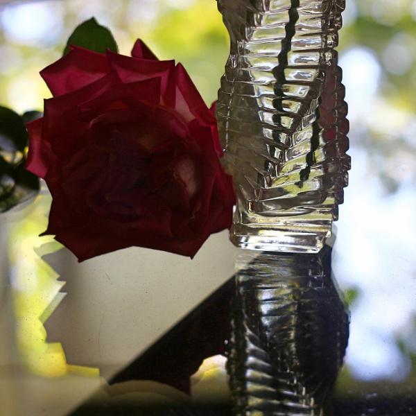 THE DARK ROSE by dimalexa