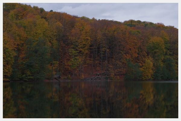 Autumnal Gleam Series #87 by PentaxBro