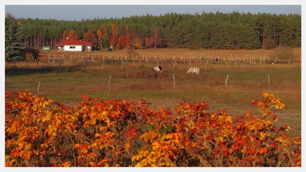 Autumnal Gleam Series #64 by PentaxBro