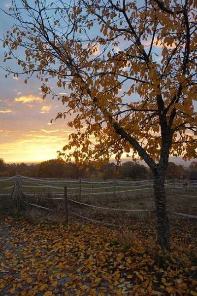 Black Forest Morning