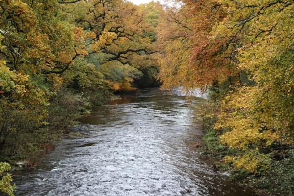 Autumn on the River Dart Devon by Sb_studio