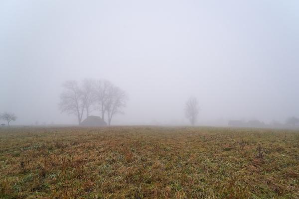 Mist by LotaLota