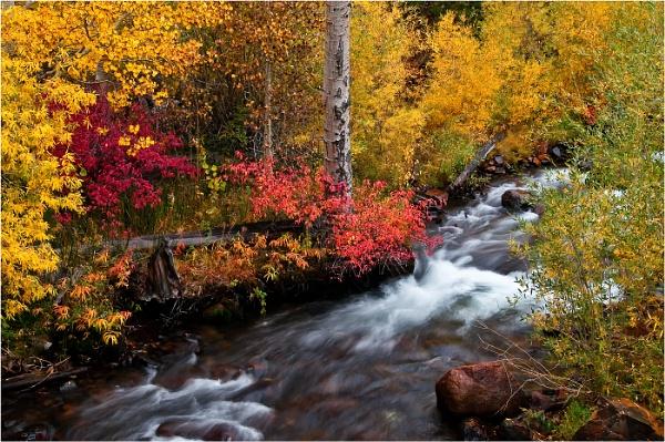 Autumn Colours by dven