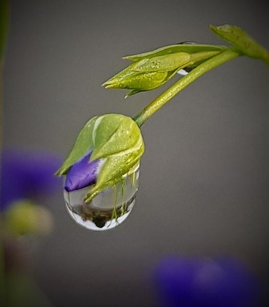 Raindrop by rosej