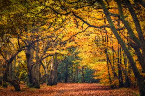 Autumn Wood by barrywebb