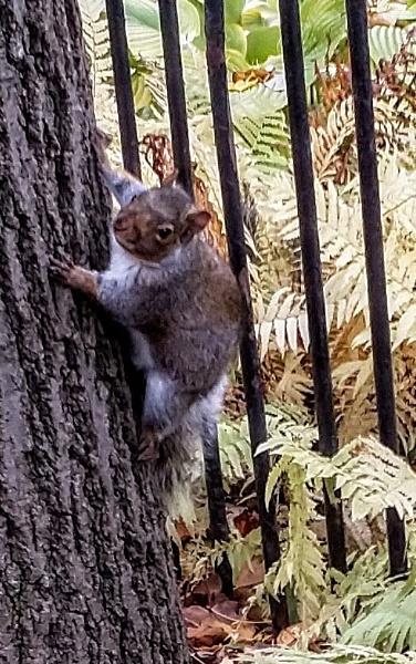 Squirrel by moglen