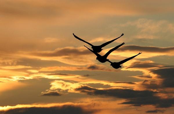 Evening Flight. by paulbroad