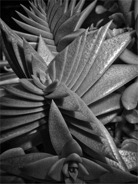 Succulent Form