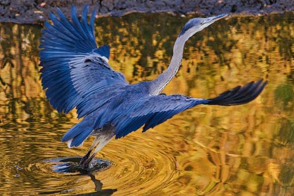 On Golden Pond by altosaxman