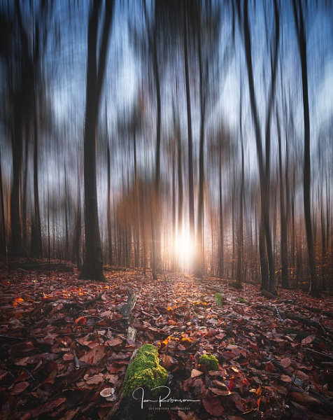 Surreal autumn forest by ianrobinson