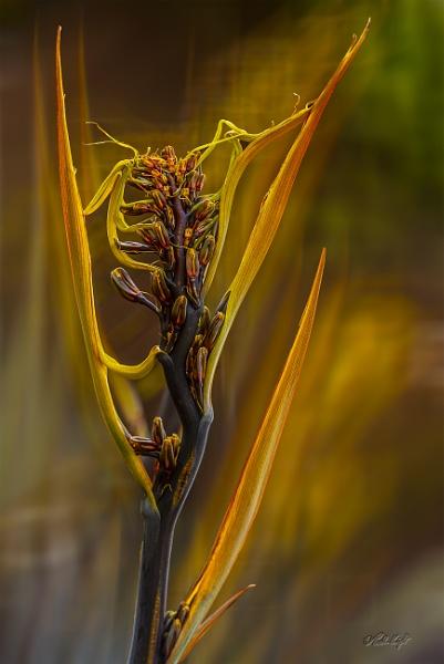 Mini Flax flower (0020) by paulknight