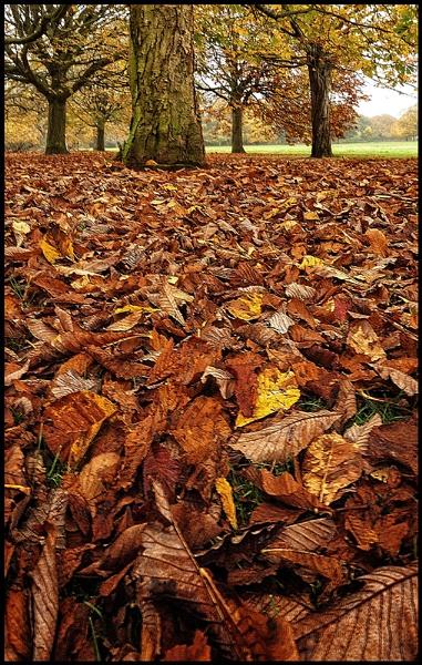 Leaf it to me !. by Niknut