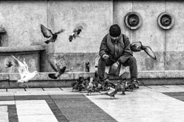 Feed the Birds II