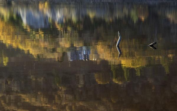 In the Loch