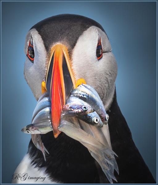 Full beak by rgg