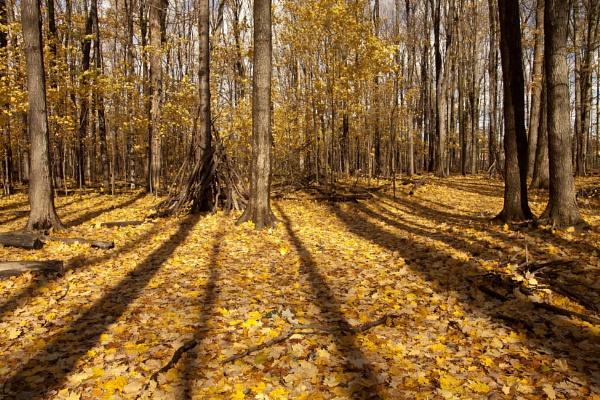 Fall shadow by manicam