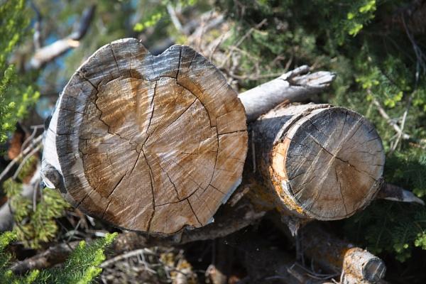 Got wood by Trekmaster01