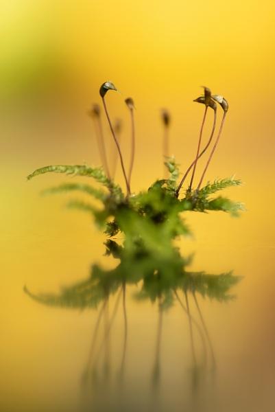 Moss by flowerpower59