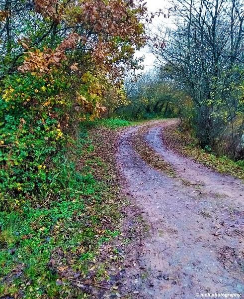Muddy Path by shell68