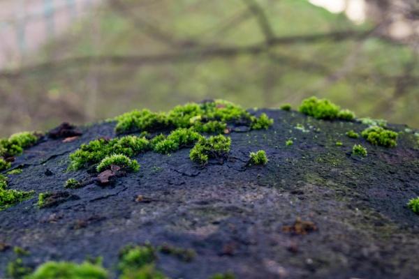 Moss on stone by rninov