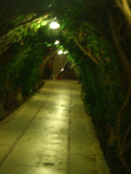 TREE AVENUE by SOUL7